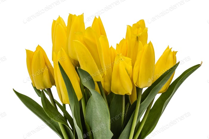 Bouquet from yellow tulips, isolated on white background