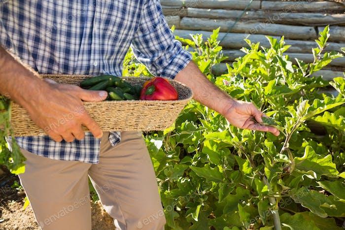Farmer holding a basket of fresh vegetables in vineyard
