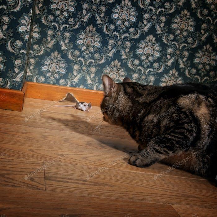 Katze und Maus in einem luxuriösen altmodischen Roon