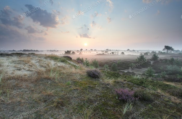 beautiful misty sunrise in summer