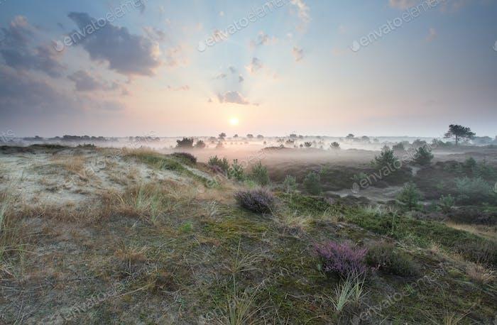 beautiful misty sunrise in summer