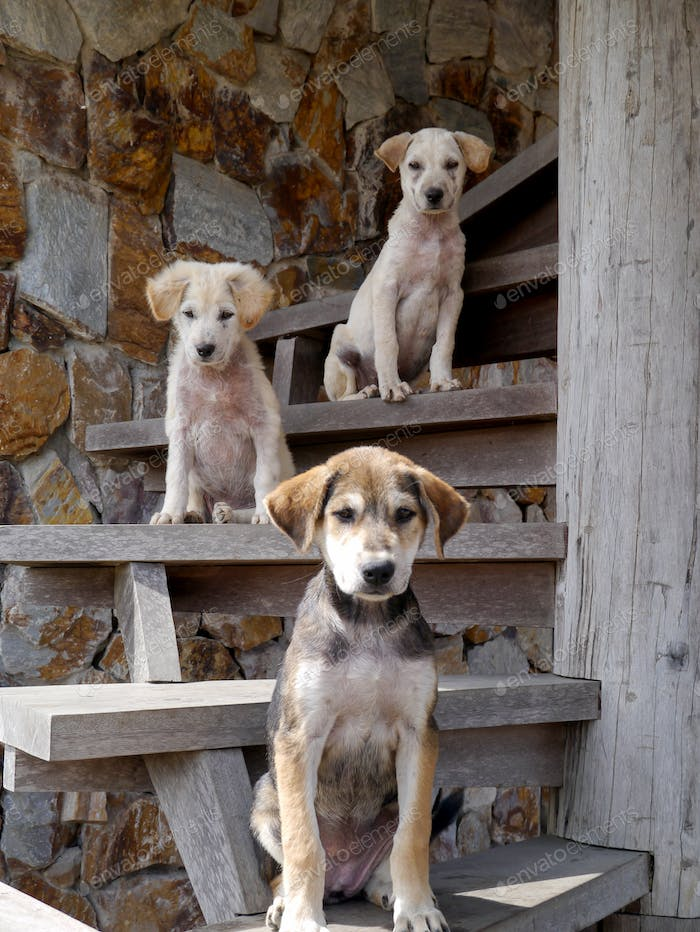 Three dogs on the stairs