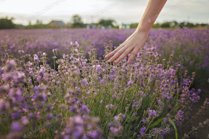 Dreamy teenager girl walks in lavender field and touches purple flowers with fingers. Summer nature