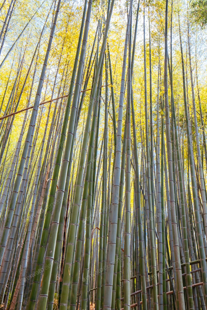 Secret Bamboo Forest of Fushimi Inari Shrine