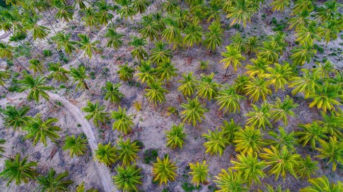 Пальмовые деревья, остров мафии