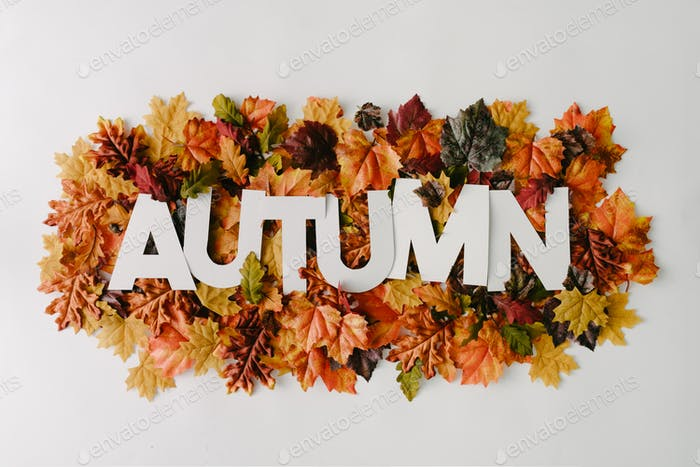 Word Autumn with colorful leaves. Creative nature concept. Minimal flat lay.