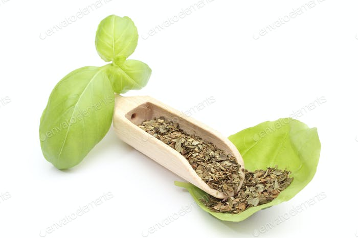 Fresh basil on wooden spoon and green leaves. White background