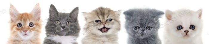 Gruppe von Kätzchen