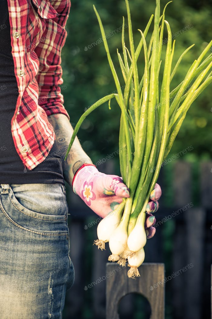Real authentic gardener holding spring onion