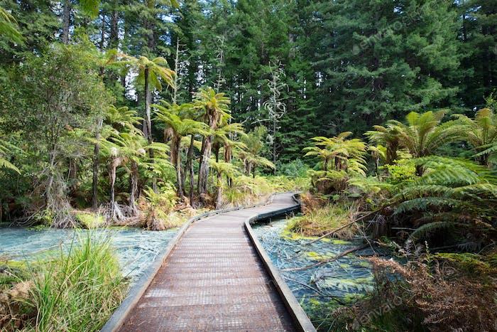 Whakarewarewa Forest Acidic Pools Rotorua