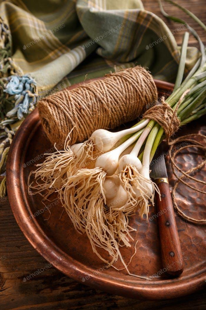 Bunch of fresh garlic