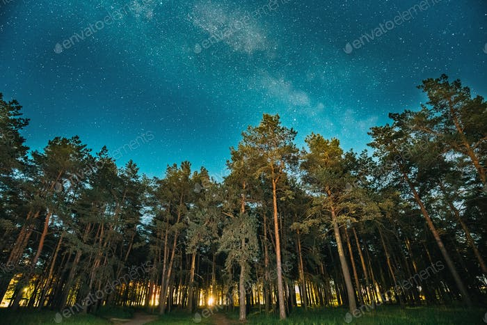 Green Trees Woods In Park Under Night Starry Sky With Milky Way