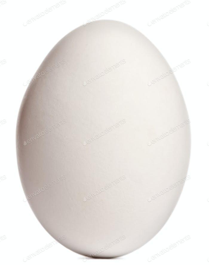 Cape Barren Goose egg, Cereopsis novaehollandiae, in front of white background