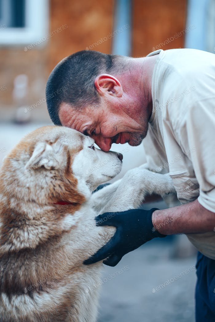 mature man in gloves hugging red husky dog forehead to forehead, eyes o eyes, care friendship