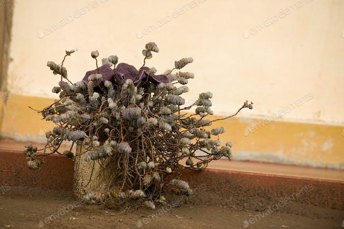 Outdoor Topfpflanze, Tansania, Afrika