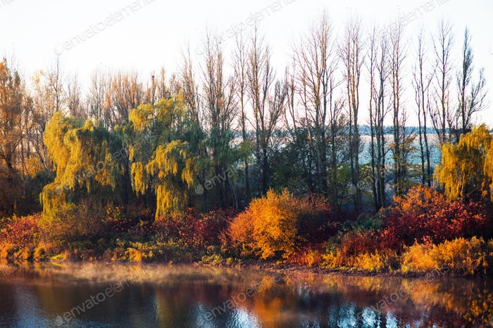 Colorful autumn foliage on Lake
