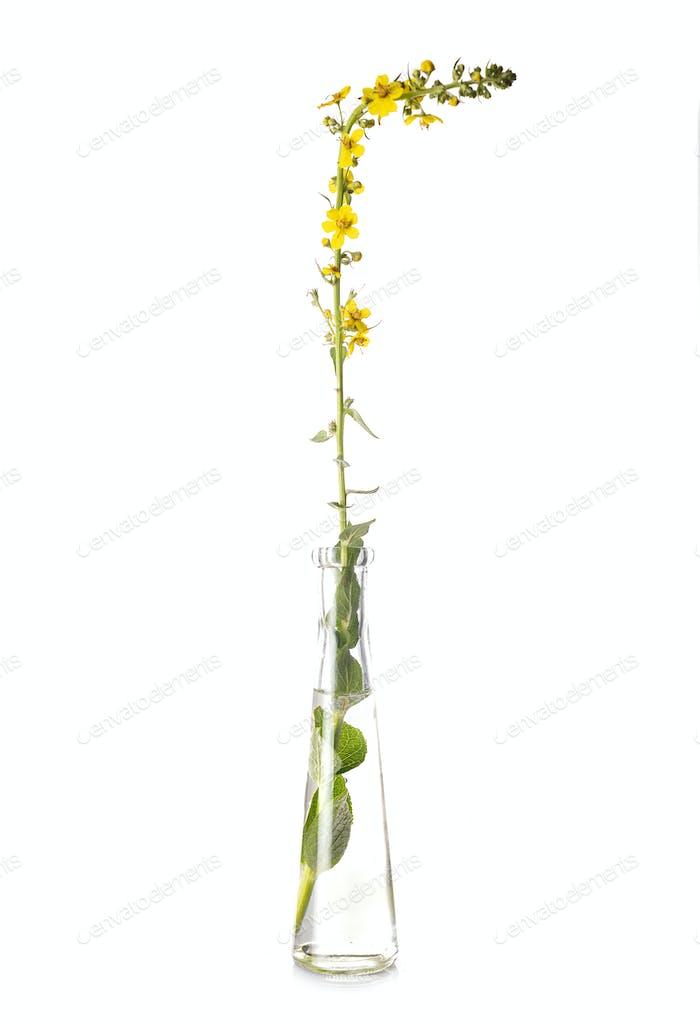 flower in test tube