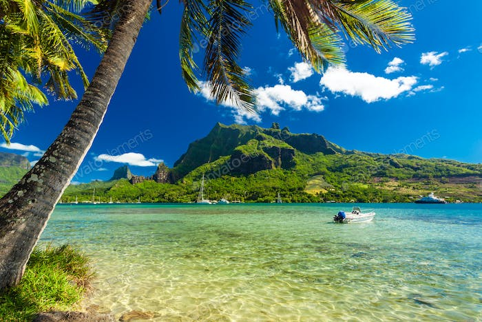 Palm Trees on Shoreline of Ocean at Moorea in Tahiti