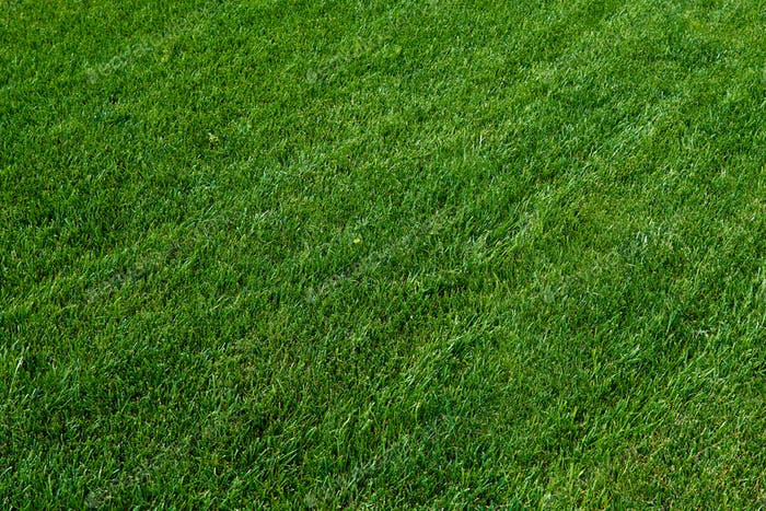 green grass texture. Green meadow