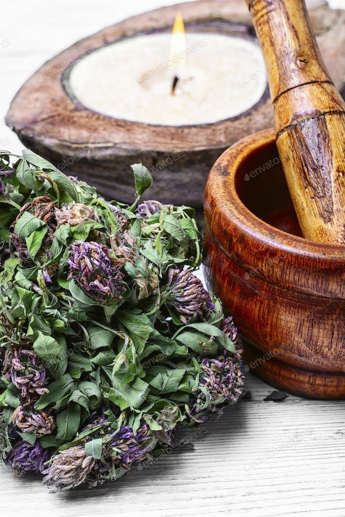 sheaf clover medicinal