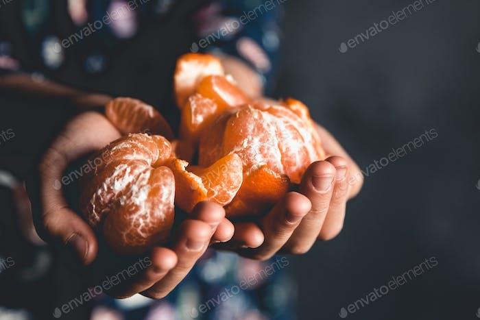 reife Mandarinen. Kinder hält Mandarinen mit grünen Blättern gerade von einem Baum gepflückt