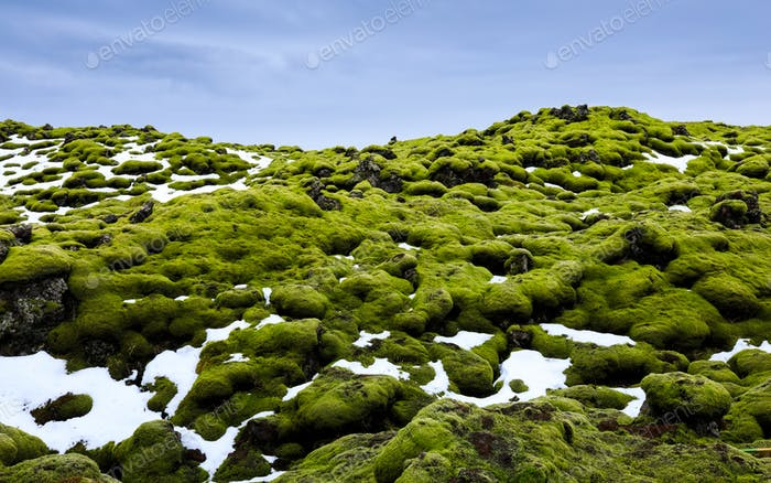 Eldhraun lava fields Covered With Moss,  Southern of Iceland