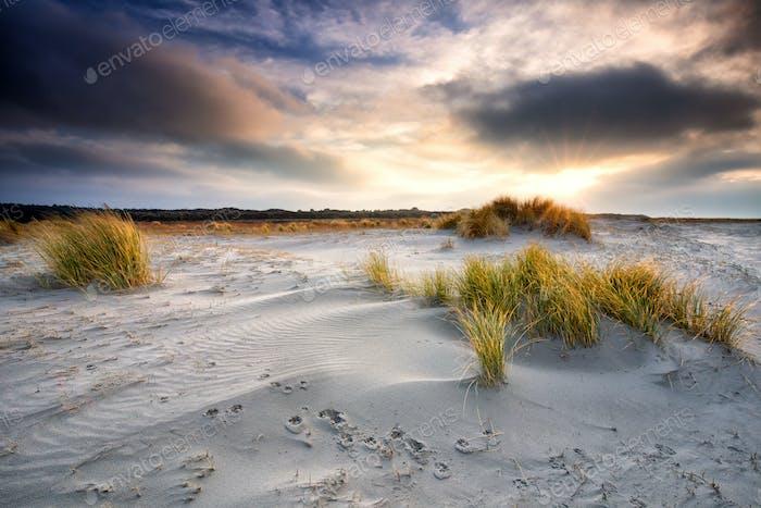 sunrise over sand dunes on sea beach