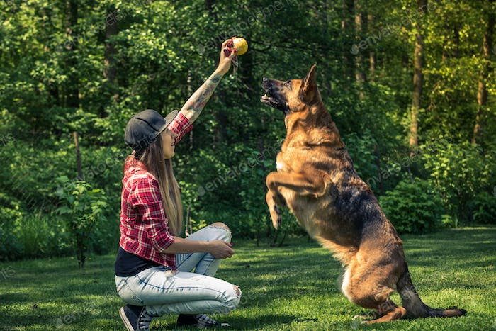 Dog jump for ball, friendship with owner