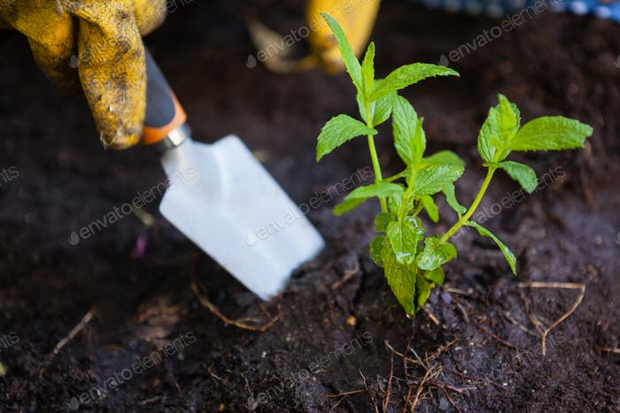 Cropped image of woman digging soil with trowel