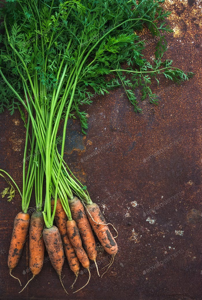 Bunch of fresh garden carrots over grunge rusty metal backdrop, top view