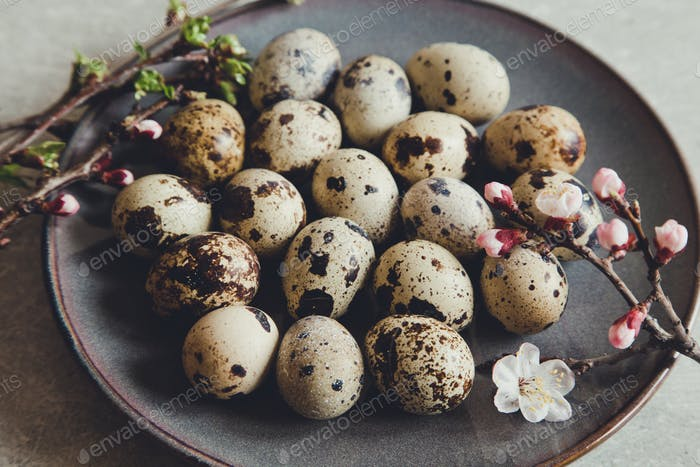 natural organic fresh quail eggs. Protein diet