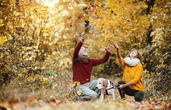 A senior couple with a dog in an autumn nature at sunset, having fun.