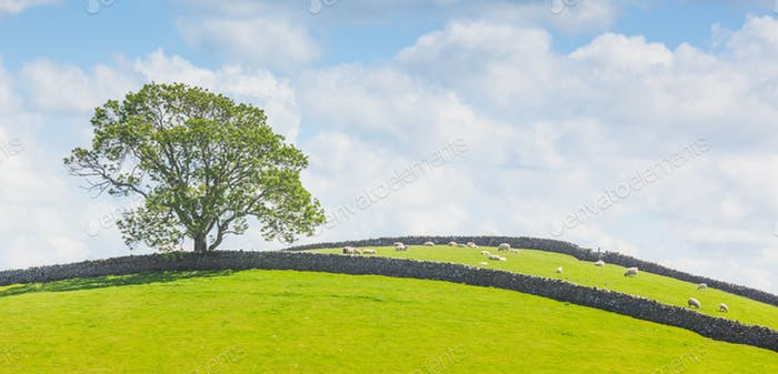 Yorkshire Dales Panoramic Landscape