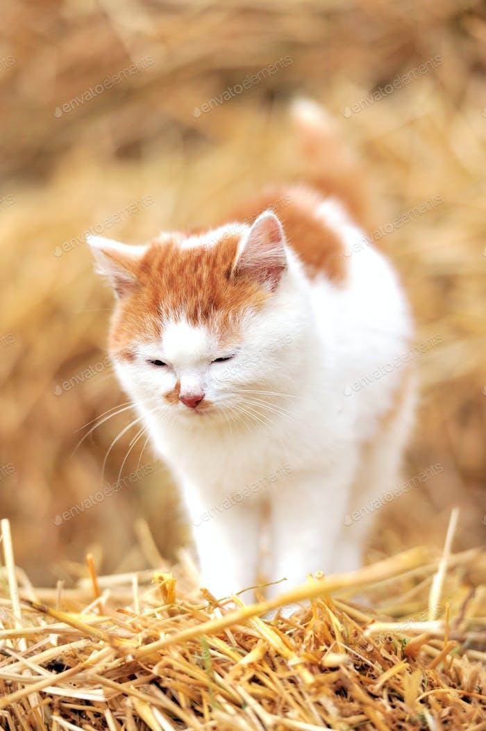 Katze auf einem Strohhalm