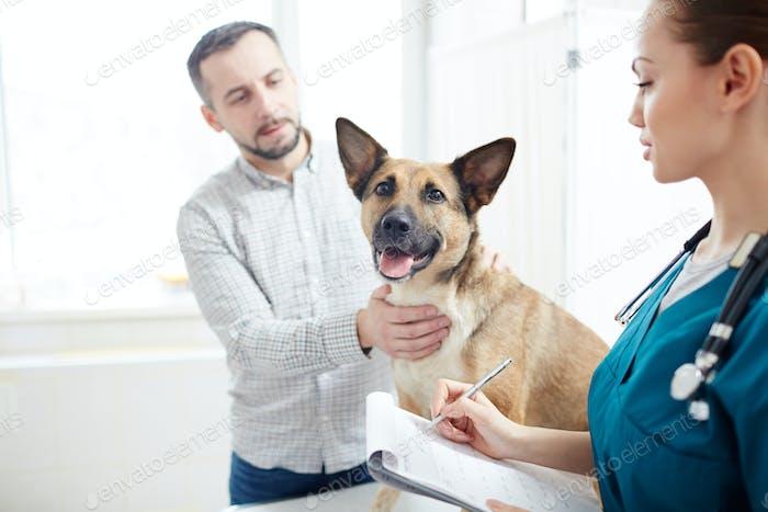 Shepherd visiting vet