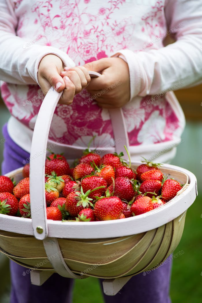 Strawberry in the Basket
