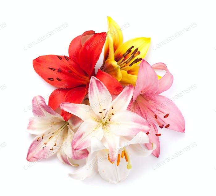 Bunte Lilie Blumen