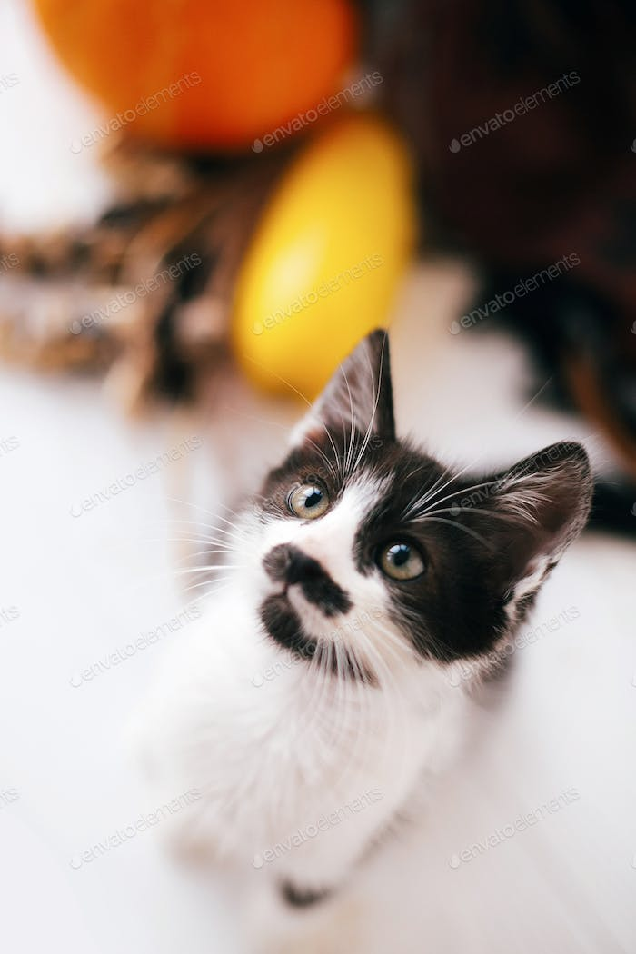 Adorable kitty with funny look playing at