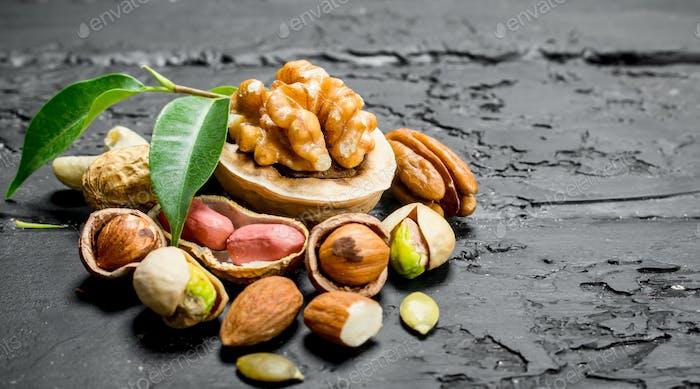 Nuts Hintergrund. Verschiedene Arten von Nüssen mit Blättern.