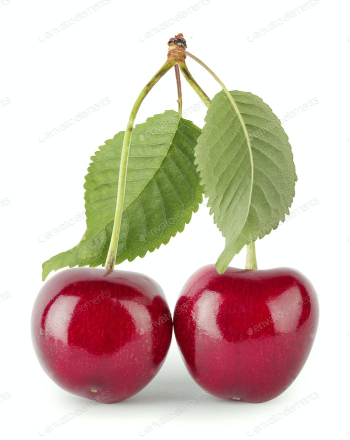 Two red cherries with leaves