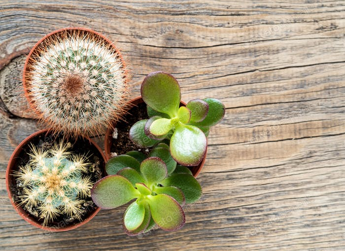 tropische Zimmerpflanzen, Kakteen und Sukkulenten