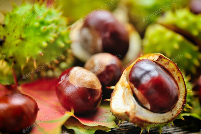 Fresh chestnuts on background autumn leaves