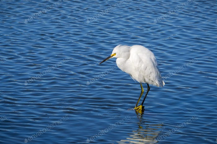 White egret standing on a rock