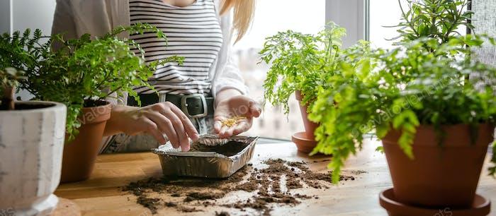 Garden,gardening home. Girl replanting green pasture in home garden.agriculture,indoor garden,room