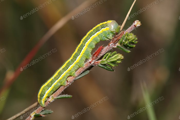 Close up of green caterpillar on tree branch