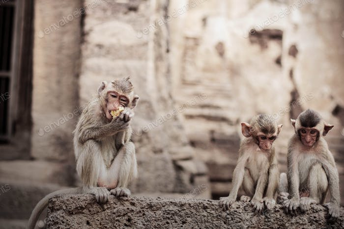 Monkey eating food on brick