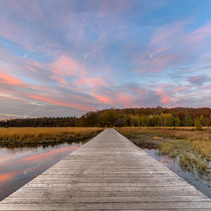 Boardwalk in natural heathland fen square