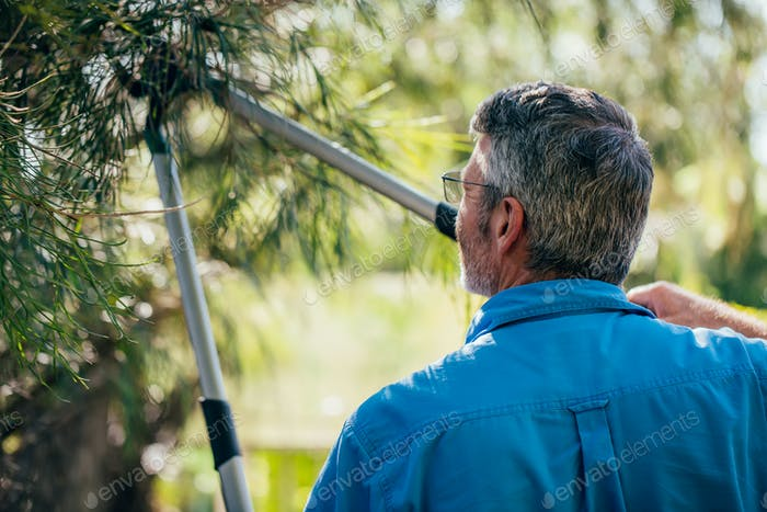 Senior man cutting trimming tree branches outside in the garden