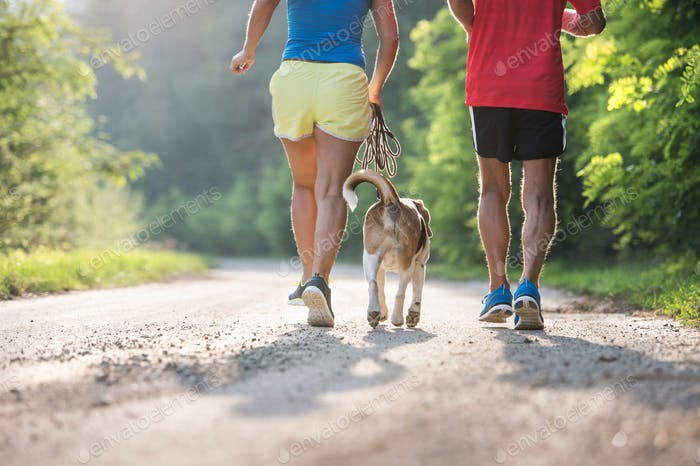 Unrecognizable senior runners with dog outside in sunny nature