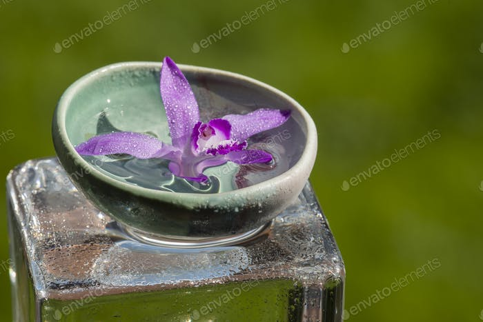 Pink orchid on glass cube
